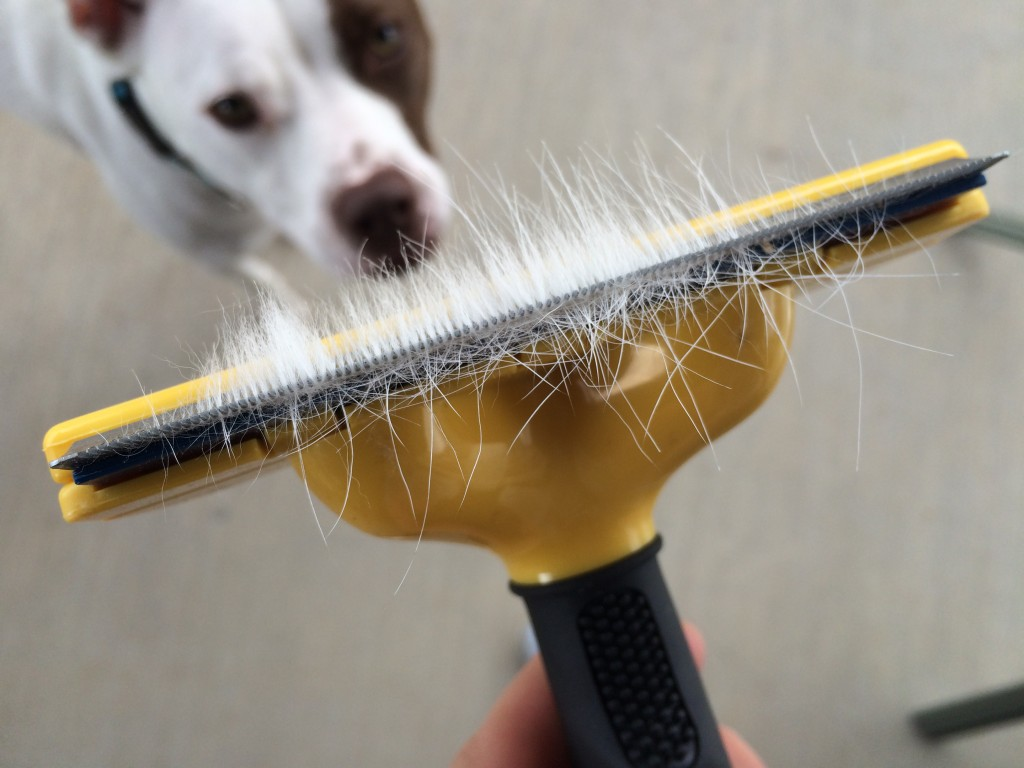 Tips to reduce shedding in dogs | lolathepitty.com