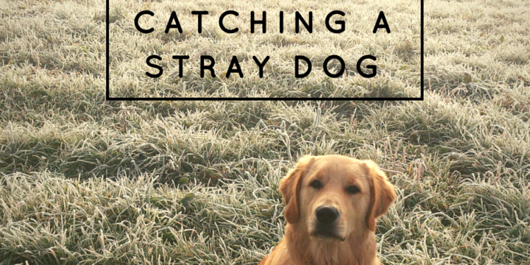 Tips for Catching a Stray Dog | lolathepitty.com
