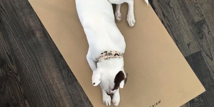 lola the pitty dog blog