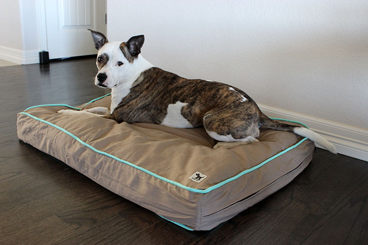 Molly Mutts Dog Bed Giveaway and Review - Lolathepitty.com