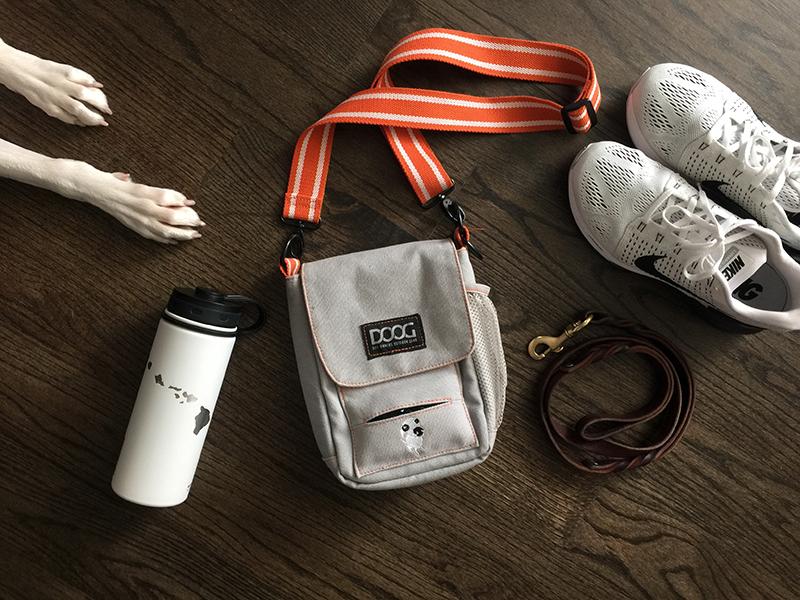 dog-walking-essentials-2