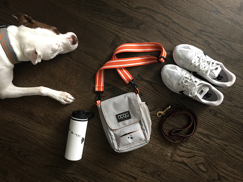 dog-walking-essentials