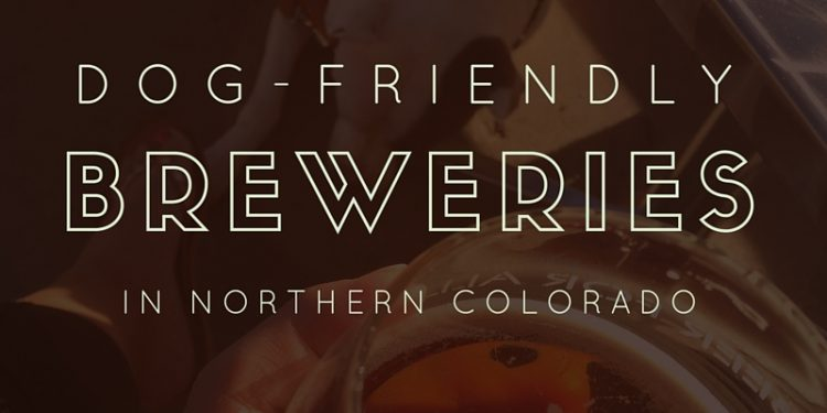 dog friendly breweries in northern colorado