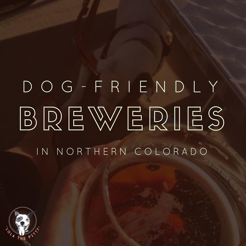 dog friendly breweries in northern colorado