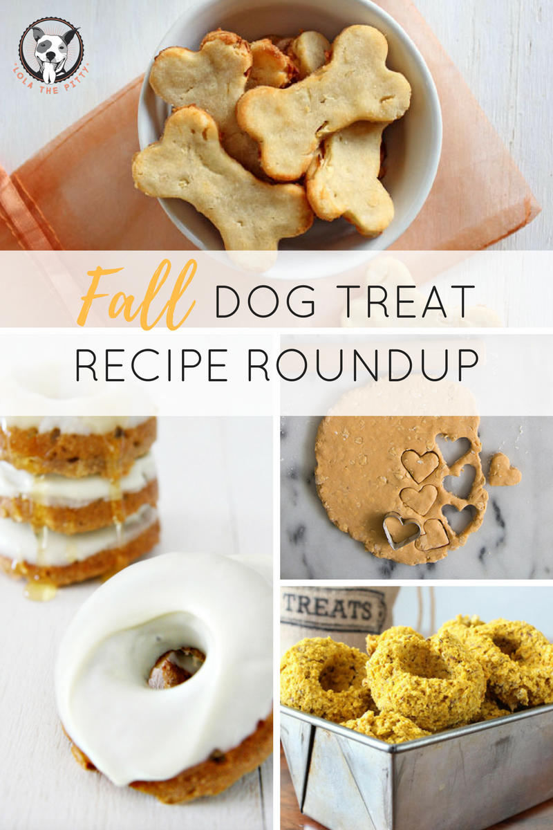 Fall Dog Treat Recipe Roundup - Lolathepitty.com