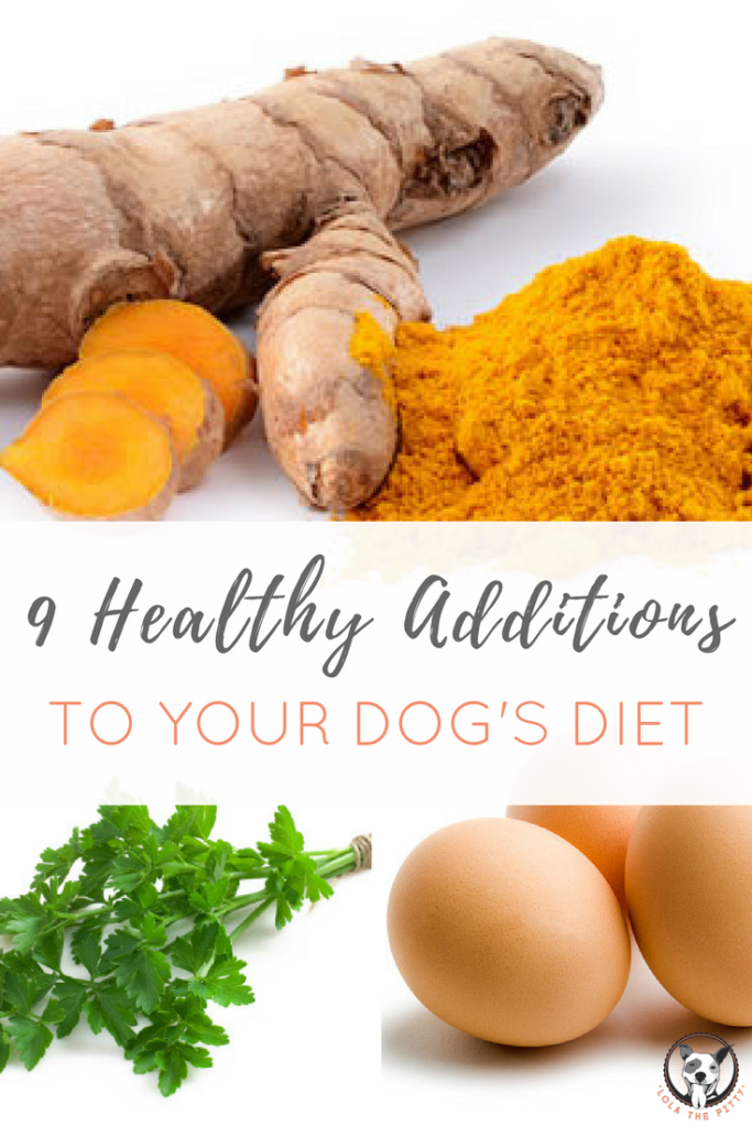 9 Healthy Foods to Add to Your Dog's Diet - lolathepitty.com